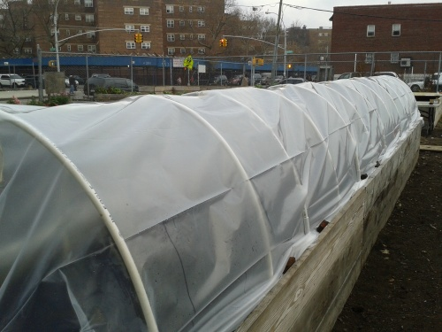 Our winter cold frame.